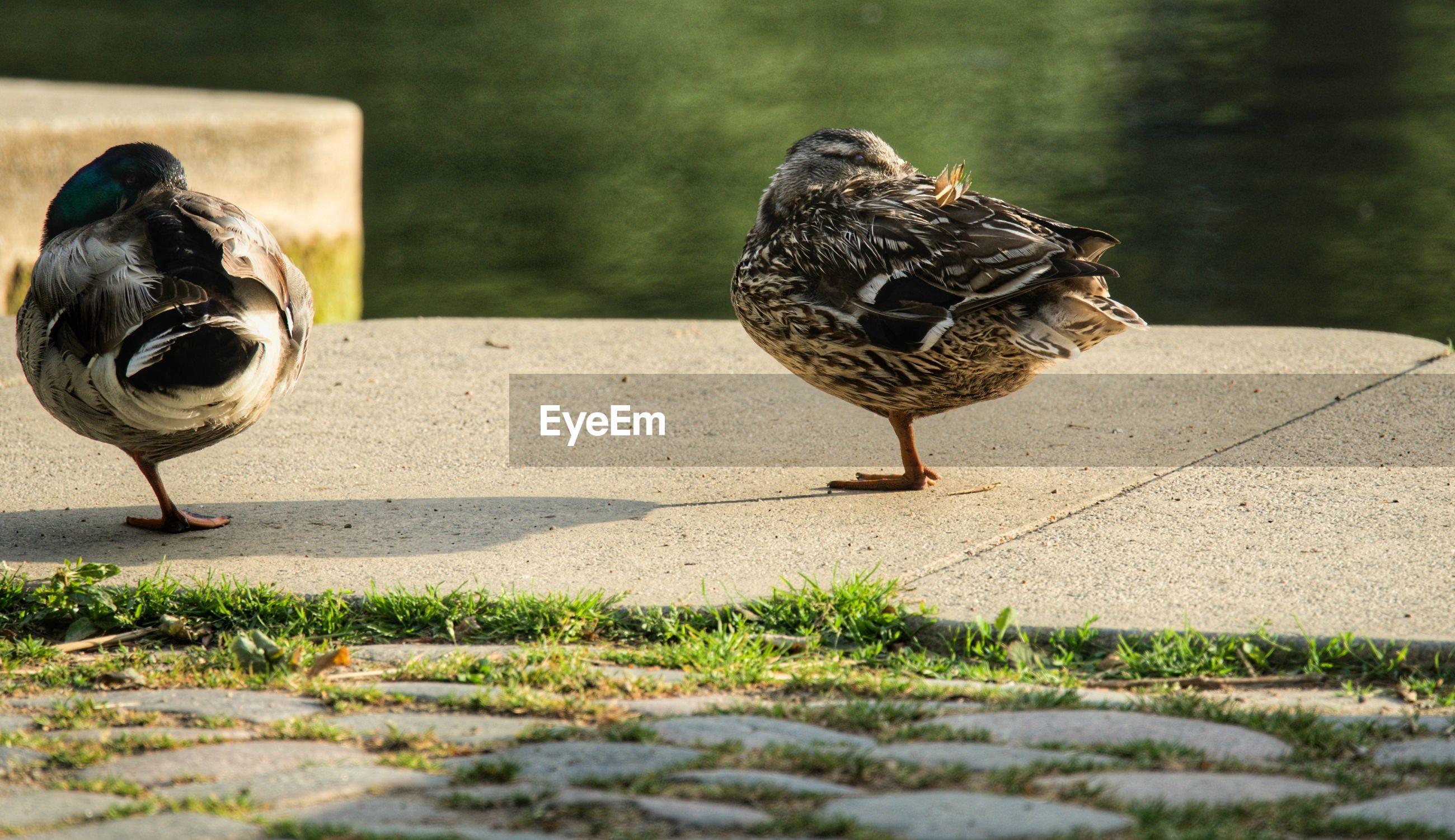 BIRD PERCHING ON THE FOOTPATH
