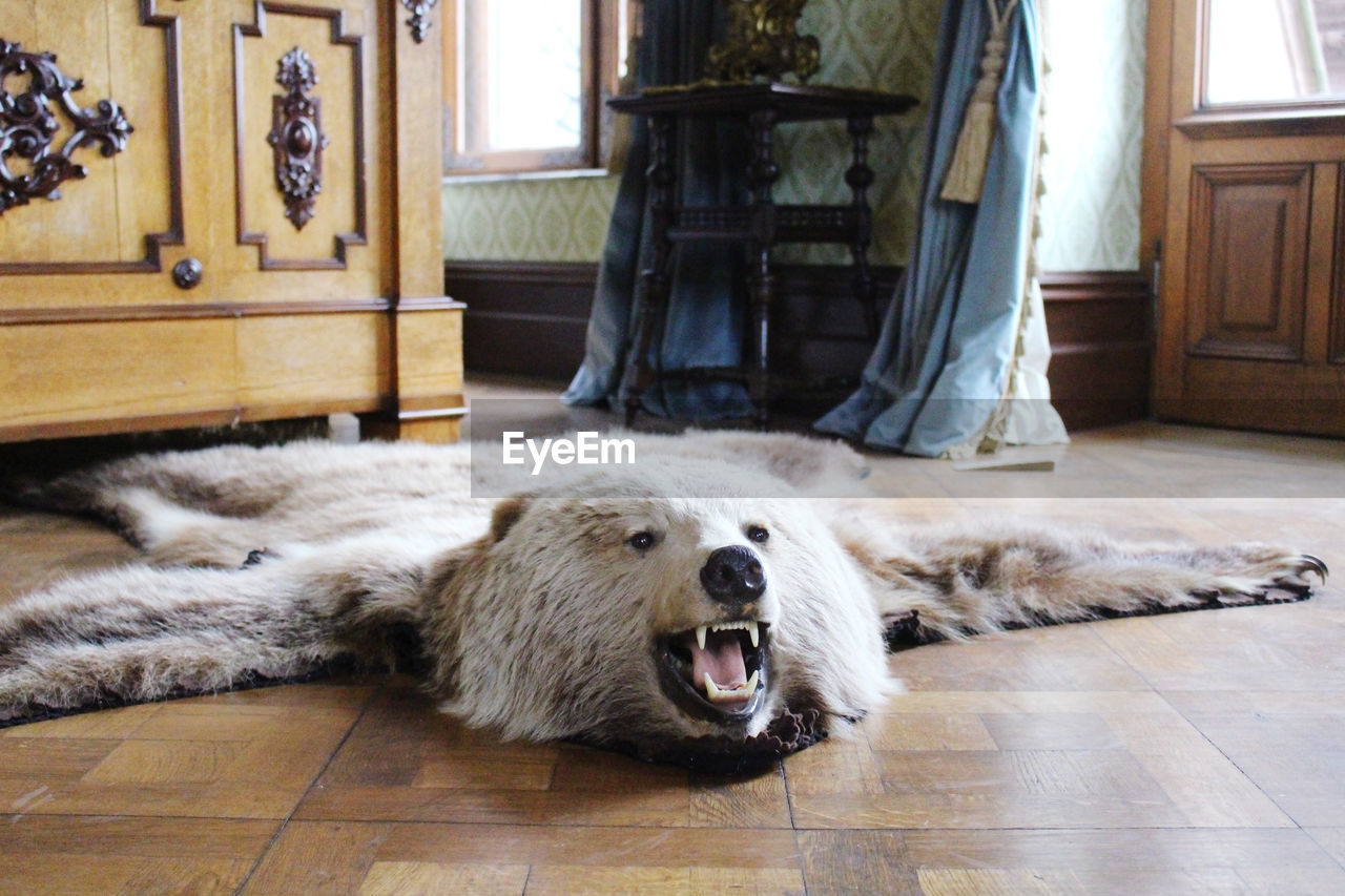 View of a bear lying down on floor