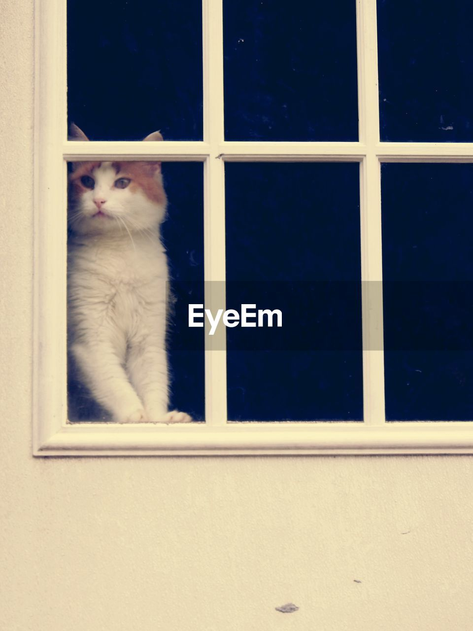 mammal, cat, domestic cat, domestic, feline, pets, one animal, domestic animals, window, vertebrate, no people, glass - material, indoors, looking, sitting, day, transparent, whisker