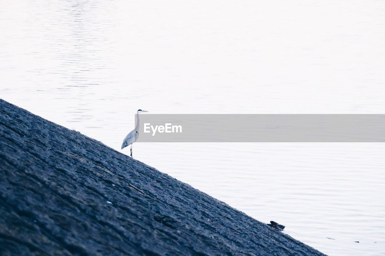 BIRDS PERCHING ON WATER