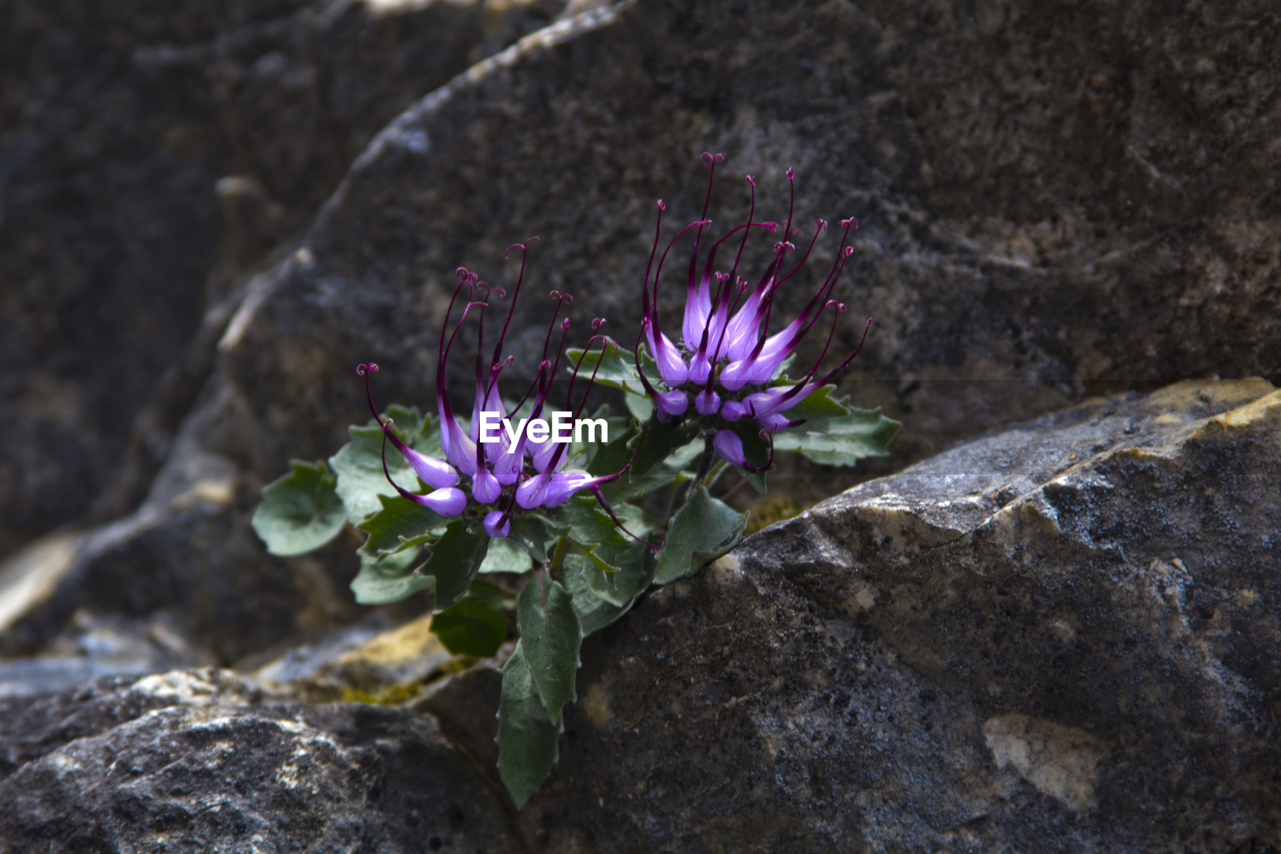 High angle view of purple buds growing on rock