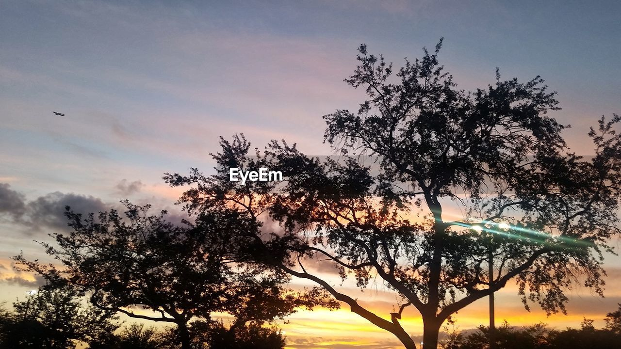 tree, sunset, sky, nature, beauty in nature, growth, outdoors, silhouette, no people, branch, scenics, tranquility, day