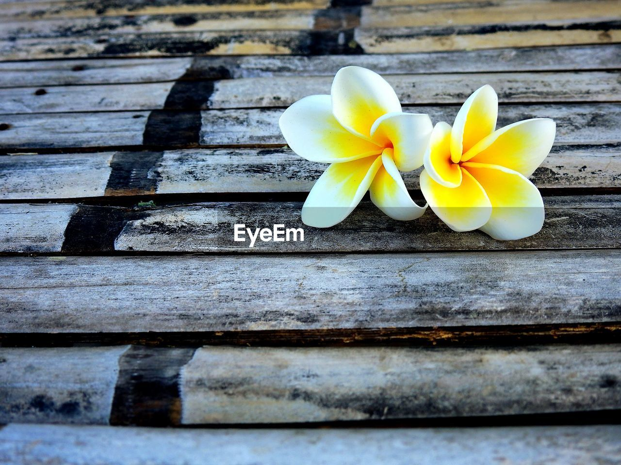 flower, frangipani, petal, wood - material, flower head, no people, fragility, yellow, freshness, beauty in nature, day, nature, outdoors, close-up