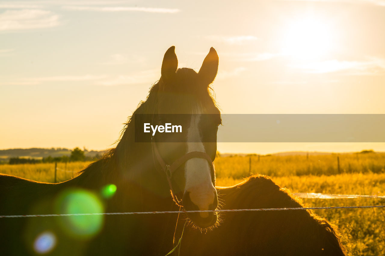 Horses On Grassy Field At Ranch During Sunny Day