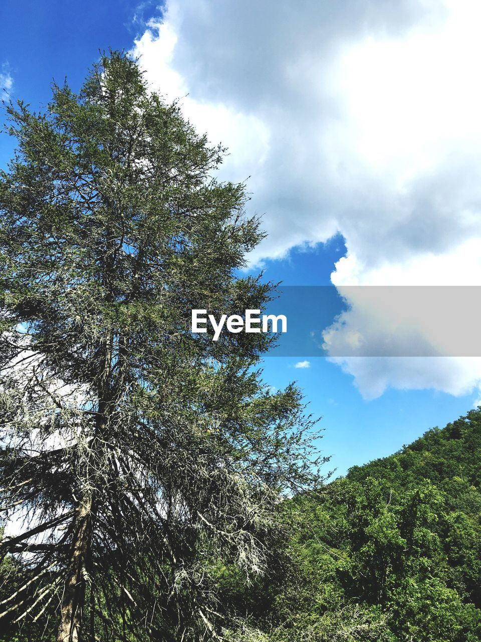 tree, nature, sky, beauty in nature, day, cloud - sky, low angle view, tranquility, growth, outdoors, no people, scenics, tranquil scene, forest, branch