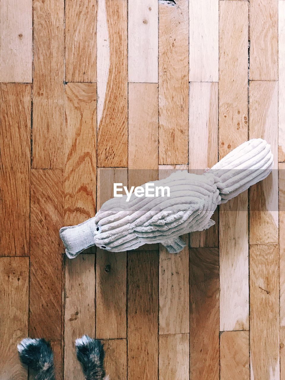 wood - material, no people, indoors, wood paneling, day, close-up, nature, animal themes