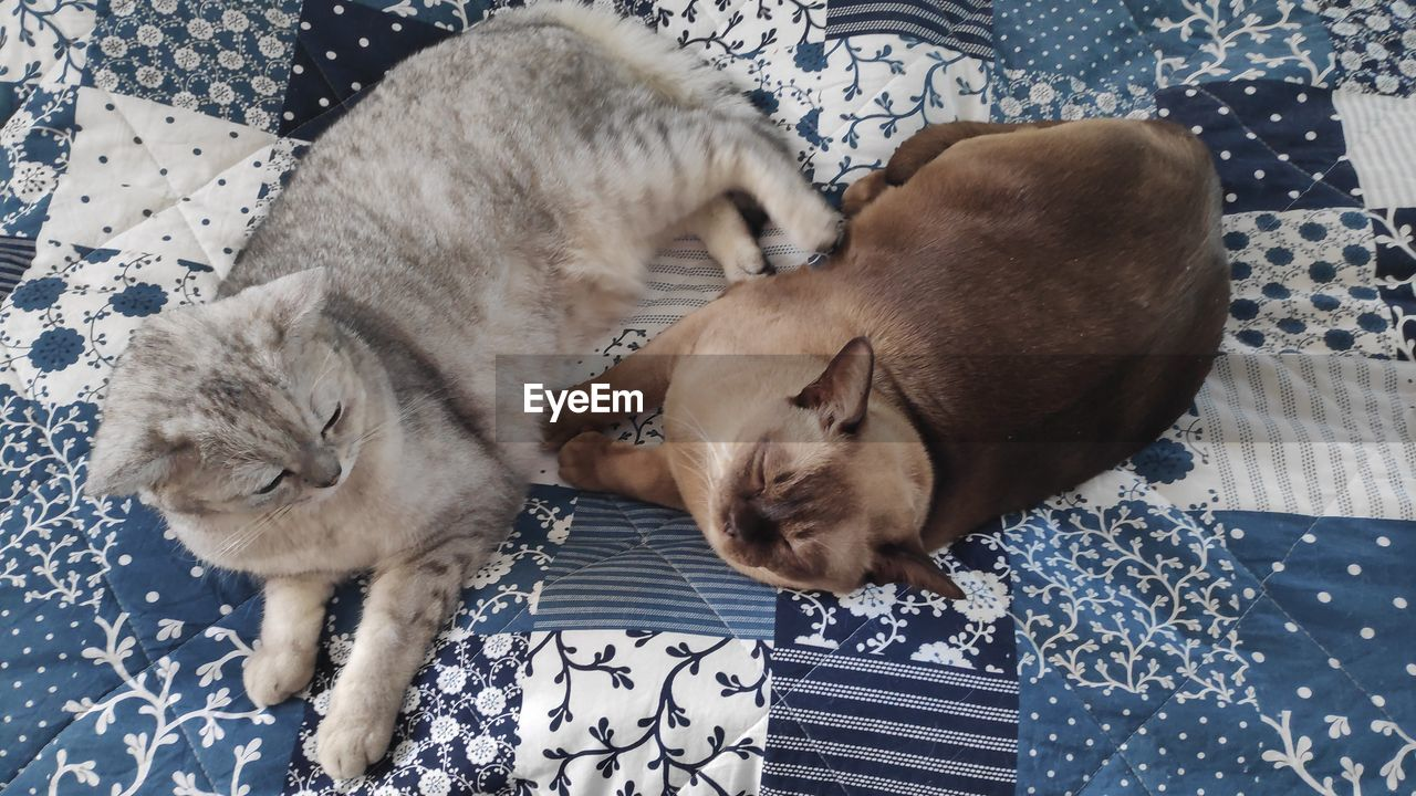 pets, domestic, mammal, domestic animals, animal themes, relaxation, animal, cat, vertebrate, sleeping, feline, furniture, domestic cat, one animal, eyes closed, bed, indoors, high angle view, resting, no people, whisker, floral pattern