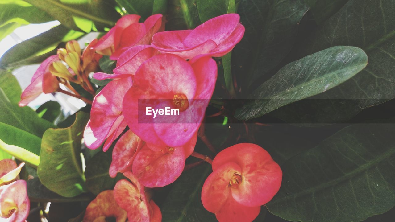 flower, petal, beauty in nature, fragility, leaf, nature, flower head, growth, freshness, plant, pink color, no people, close-up, outdoors, day, blooming