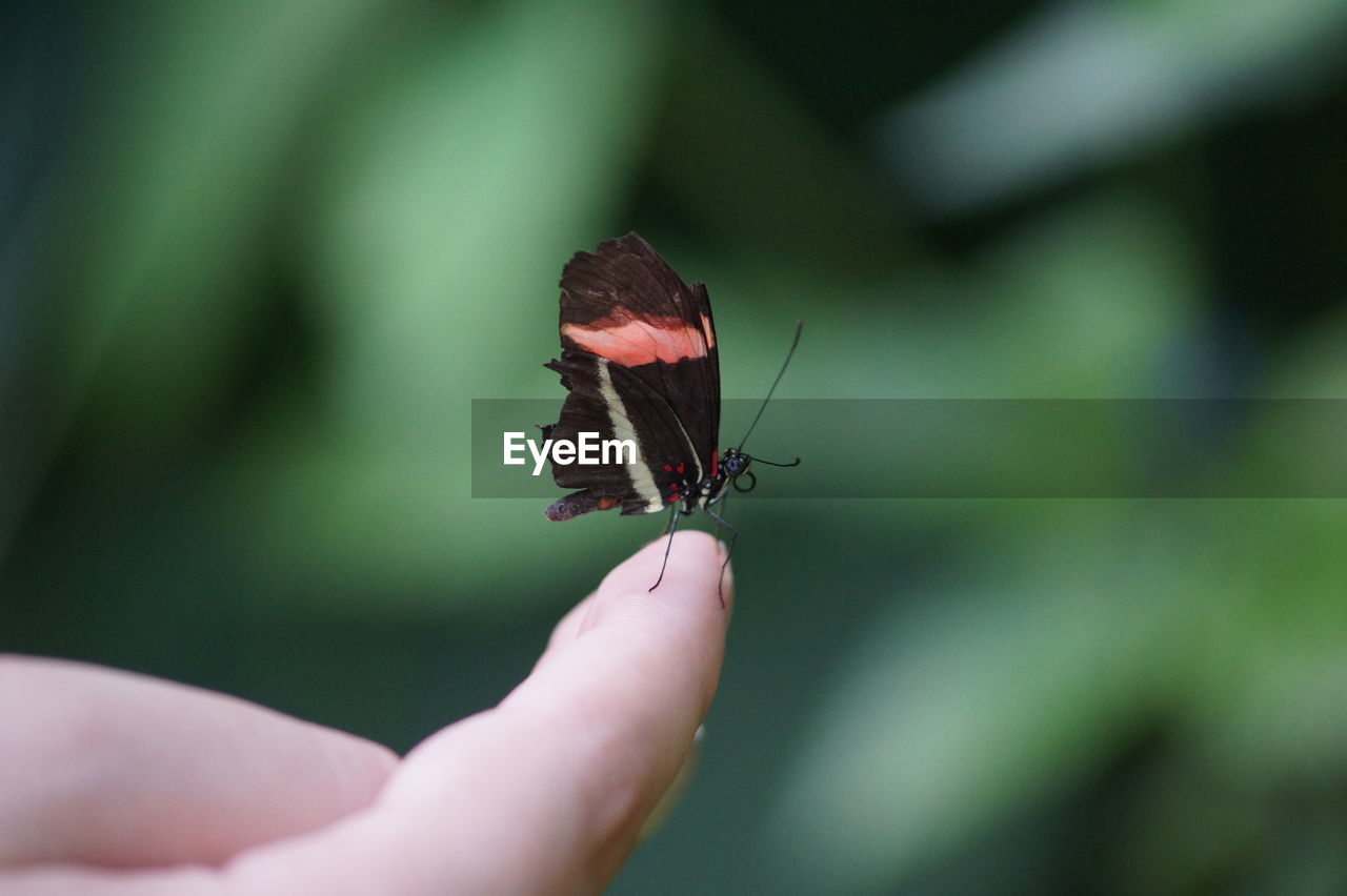 Close-Up Of Butterfly On Person Finger
