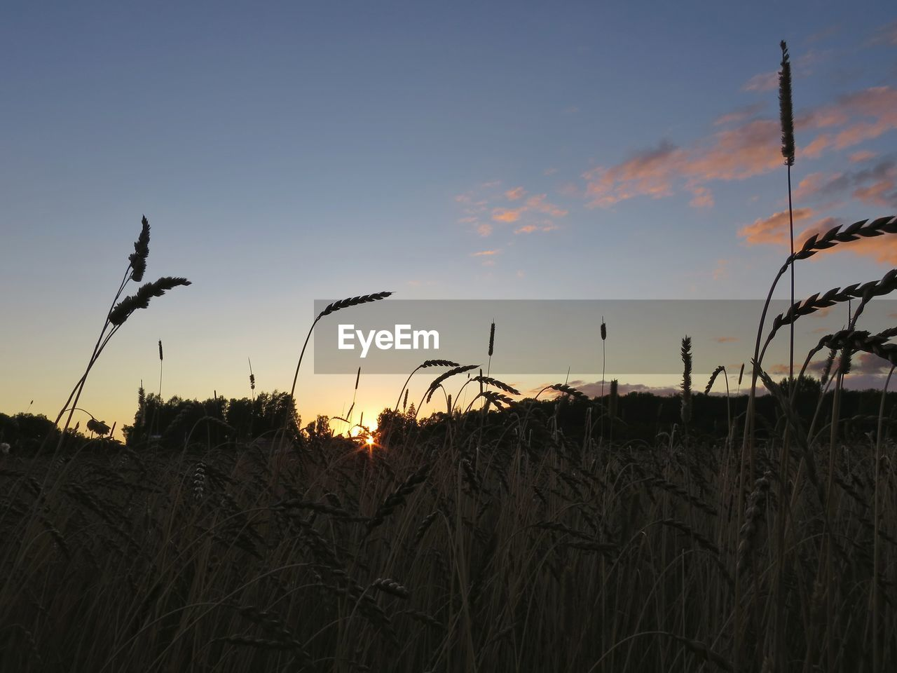 growth, nature, sunset, plant, beauty in nature, tranquility, tranquil scene, field, no people, sky, outdoors, scenics, silhouette, landscape, grass, day, close-up