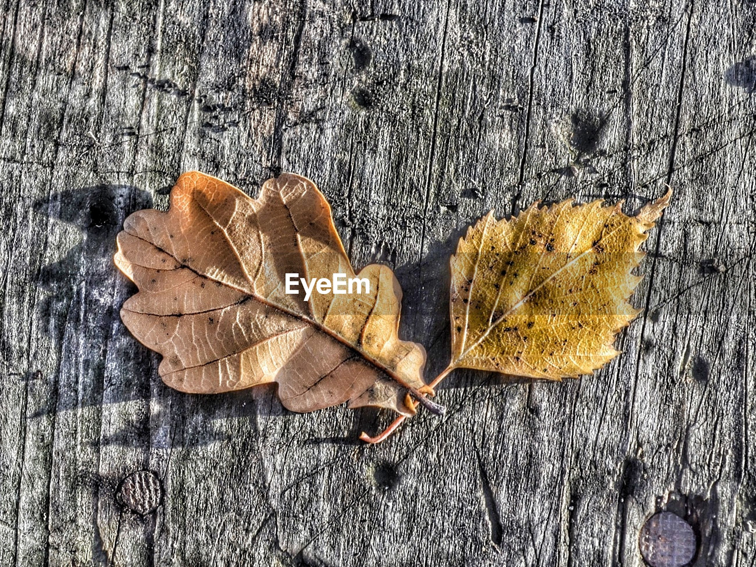 autumn, leaf, dry, change, high angle view, fallen, wood - material, season, close-up, textured, nature, natural pattern, day, outdoors, no people, leaves, ground, still life, natural condition, aging process