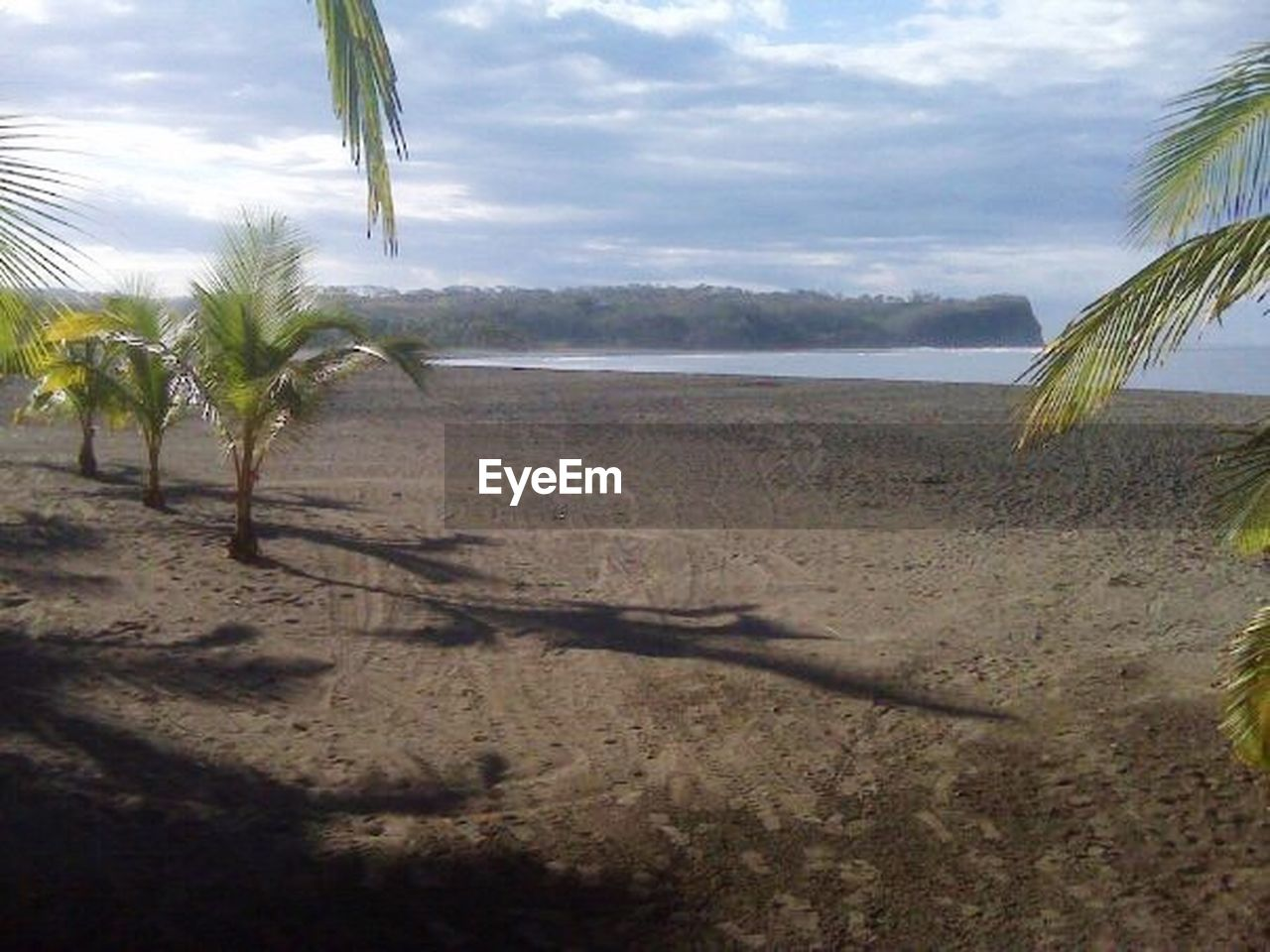 sand, palm tree, nature, growth, sky, tree, beach, landscape, scenics, no people, sea, day, outdoors, beauty in nature