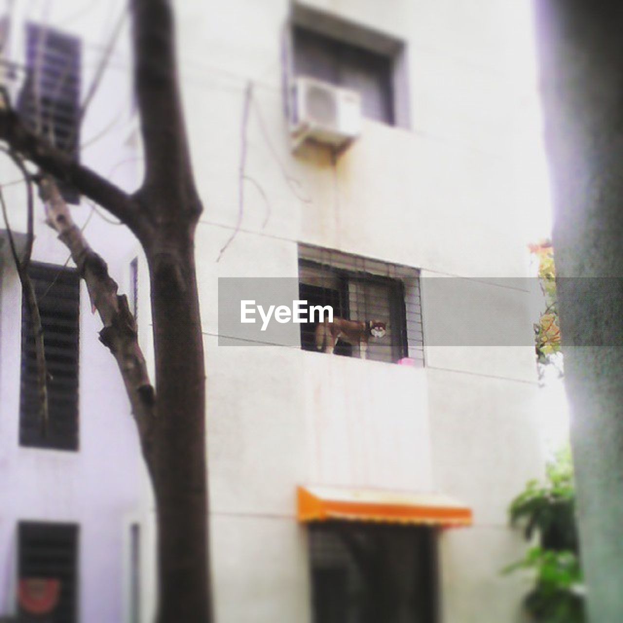 building exterior, architecture, built structure, window, no people, outdoors, day, city, tree
