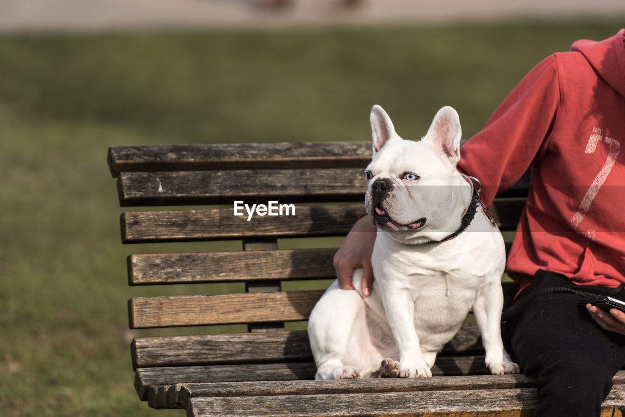Cropped Image Of Person With French Bulldog Sitting On Bench