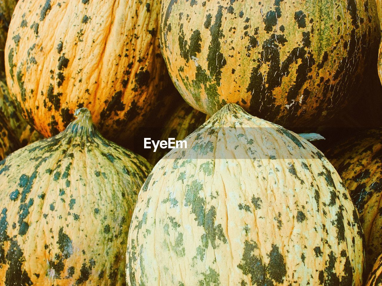Close-up of pumpkin for sale at market stall