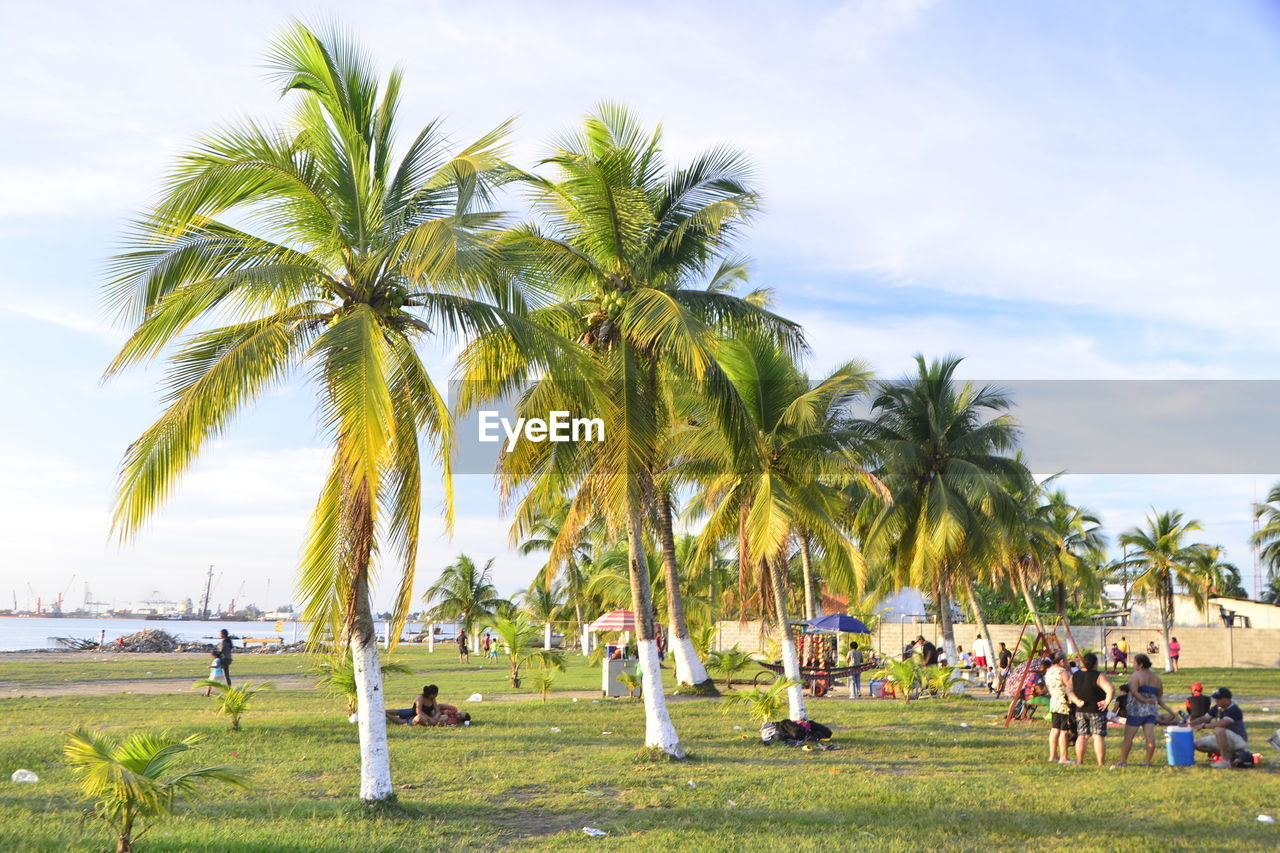 tree, plant, tropical climate, sky, palm tree, grass, land, nature, cloud - sky, day, green color, group of people, field, growth, beauty in nature, real people, outdoors, incidental people, large group of people, environment