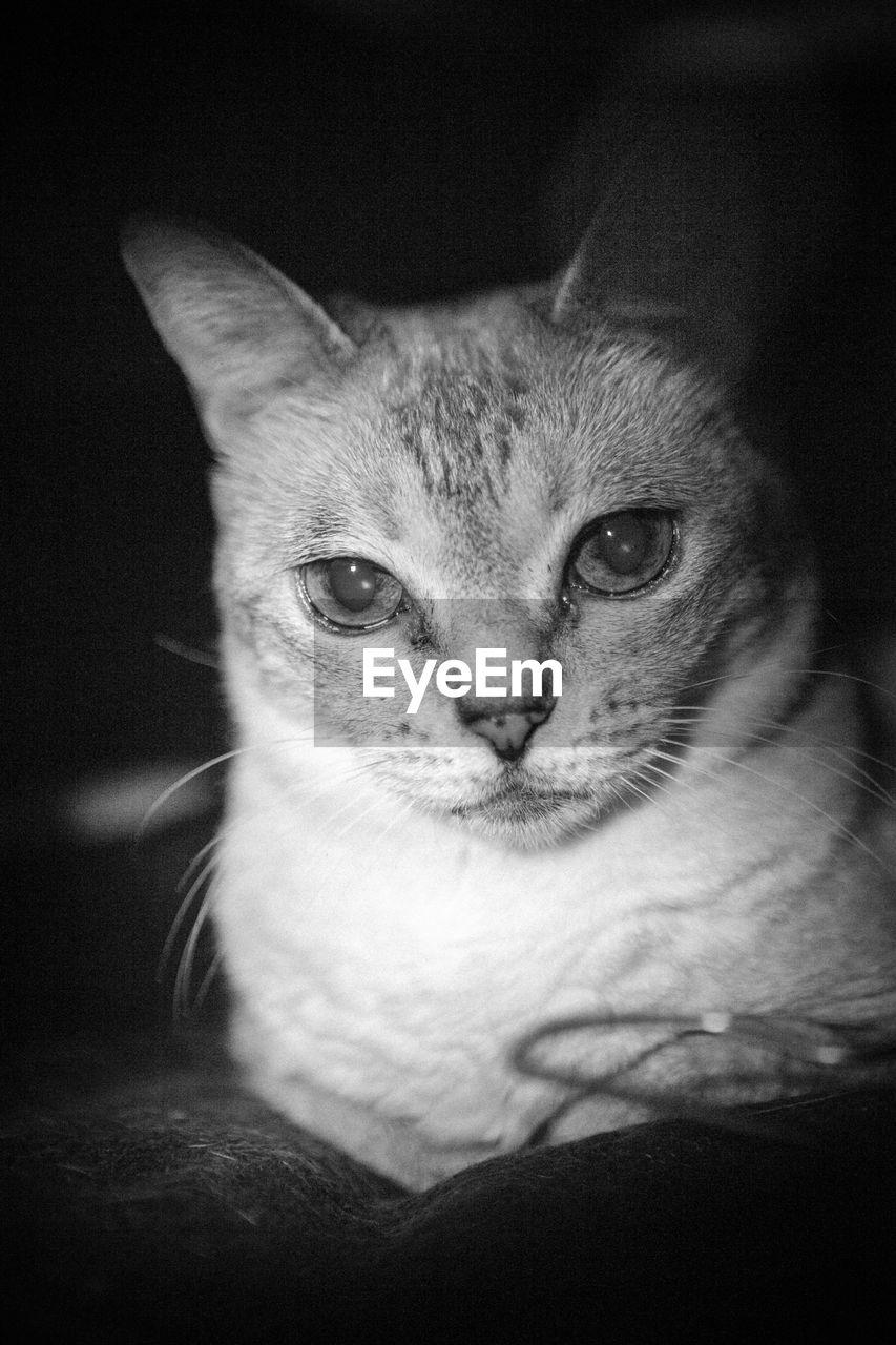 Close-up portrait of cat sitting in darkroom