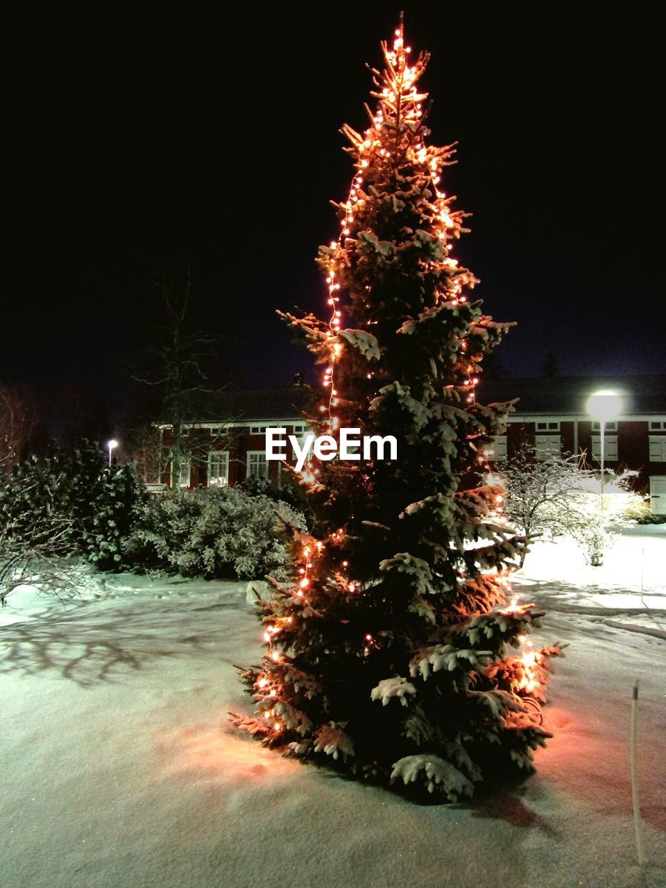 christmas, christmas tree, night, illuminated, winter, tree, christmas decoration, snow, christmas lights, no people, celebration, cold temperature, building exterior, nature, outdoors, tradition, built structure, christmas ornament, architecture, beauty in nature, sky