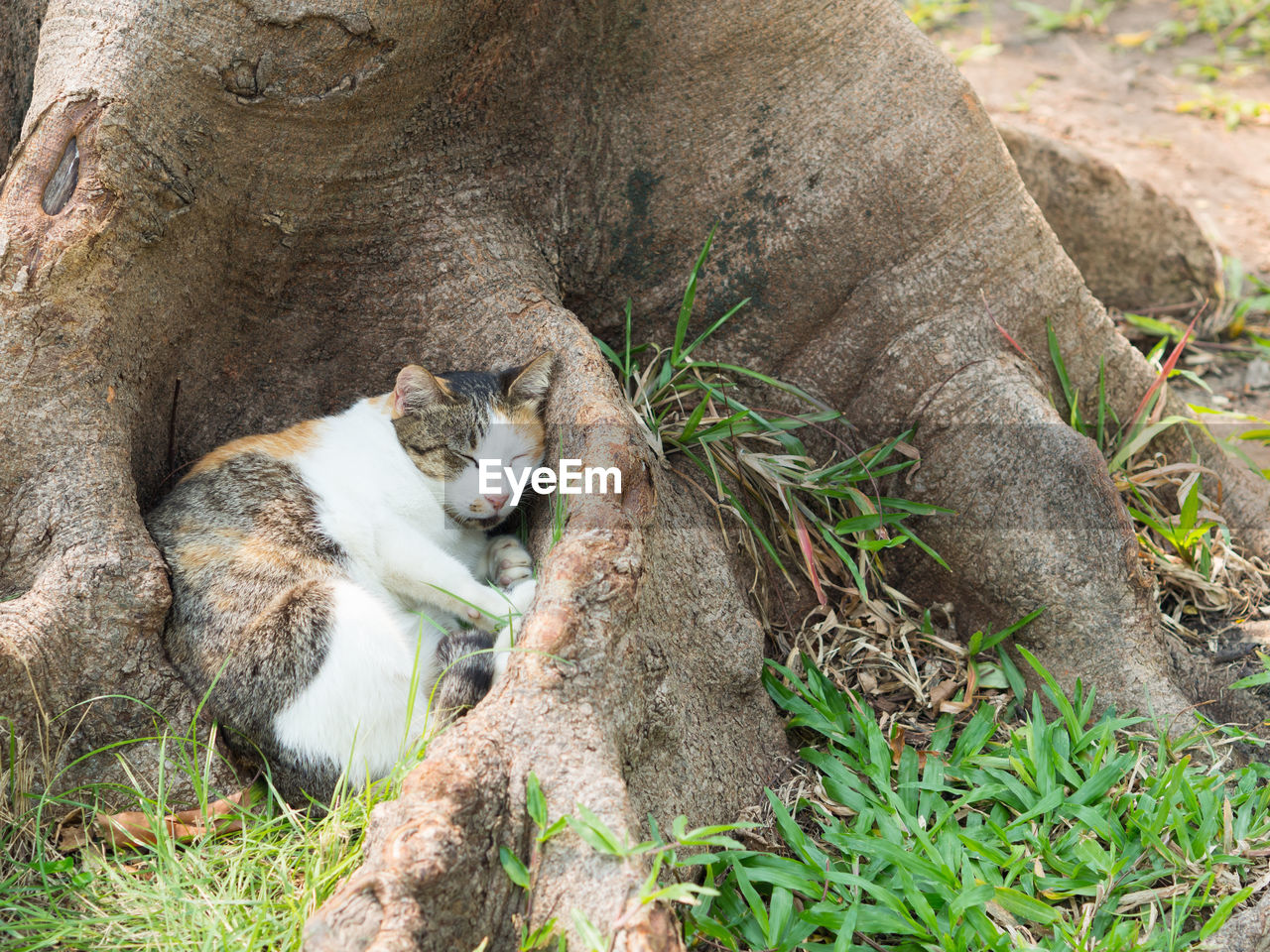 mammal, animal themes, animal, domestic cat, cat, feline, one animal, pets, domestic, domestic animals, plant, vertebrate, no people, relaxation, tree, nature, day, high angle view, animal wildlife, tree trunk
