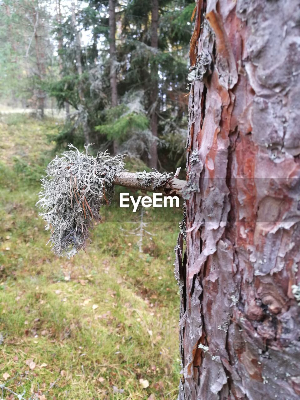 day, no people, focus on foreground, outdoors, tree, tree trunk, close-up, nature