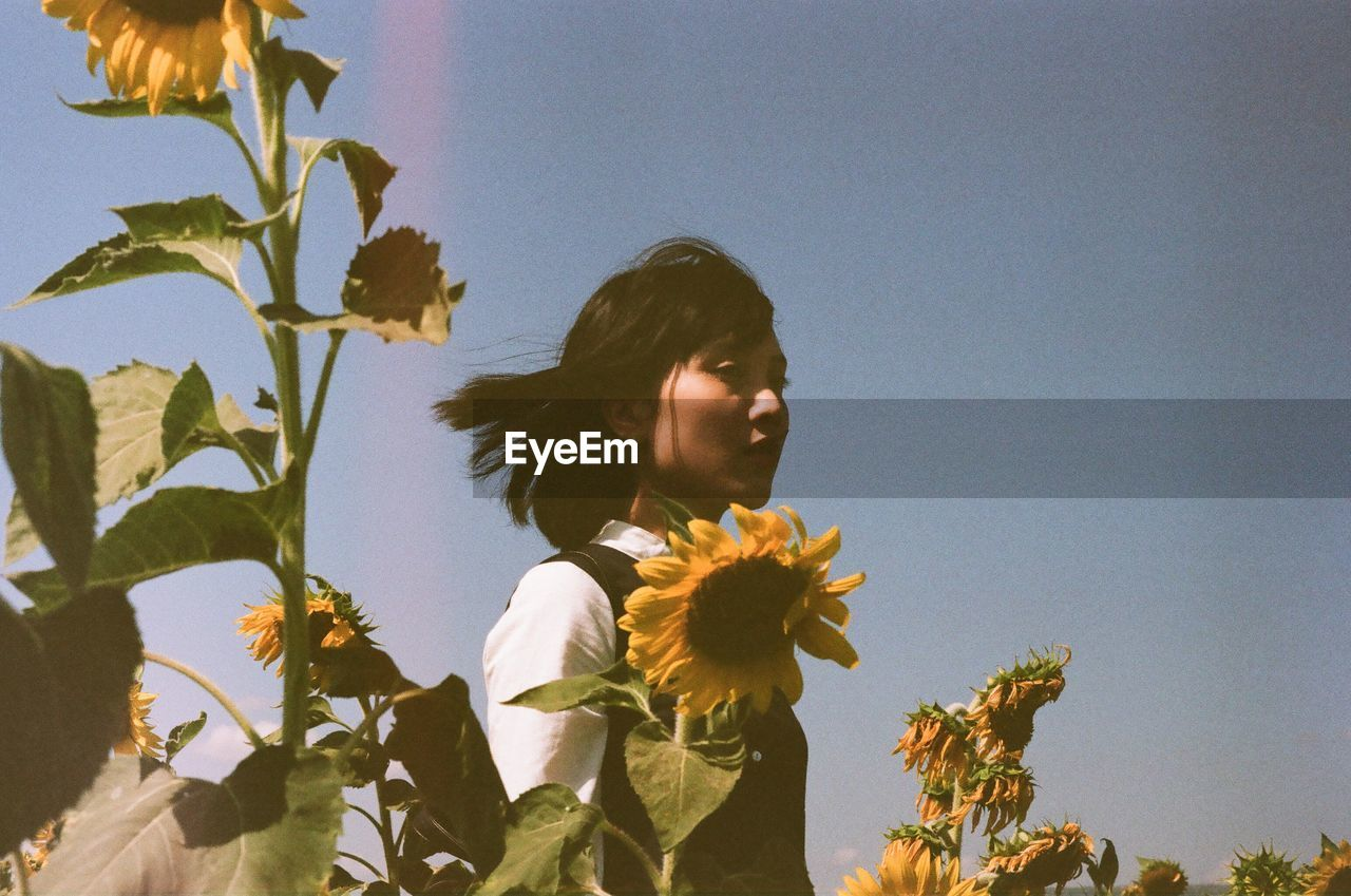 Low angle view of young woman standing amidst sunflowers