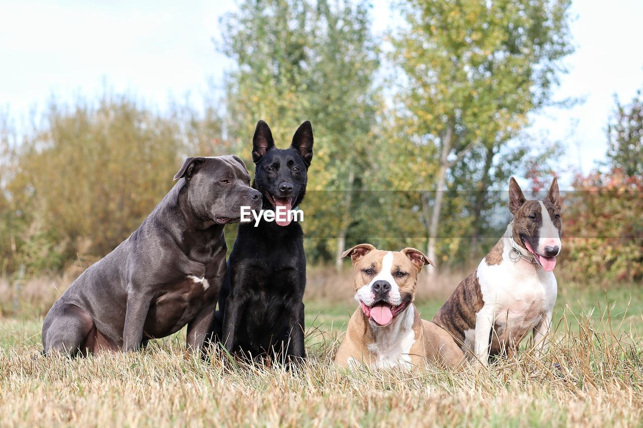 canine, dog, group of animals, domestic, pets, animal themes, domestic animals, mammal, animal, plant, tree, two animals, field, grass, vertebrate, day, land, nature, focus on foreground, no people, purebred dog