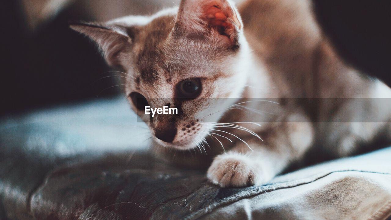 Close-Up Of Kitten On Seat