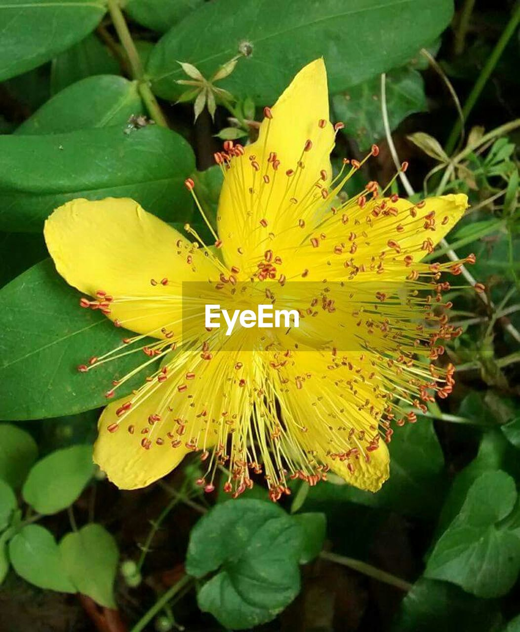 growth, leaf, nature, flower, plant, beauty in nature, petal, green color, fragility, freshness, flower head, outdoors, day, close-up, yellow, no people, blooming, animal themes