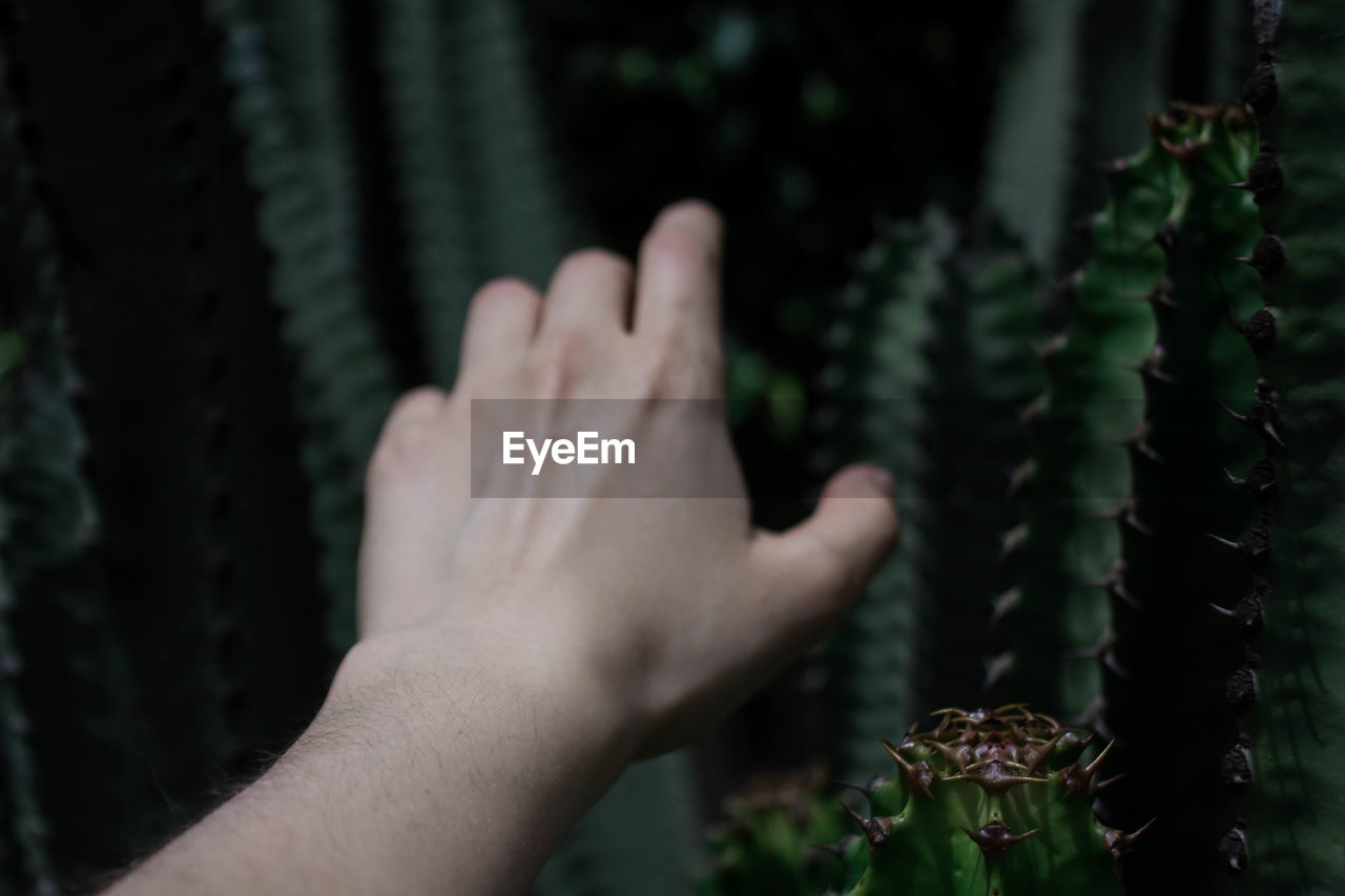Cropped Hand Reaching Out To Thorny Cactus