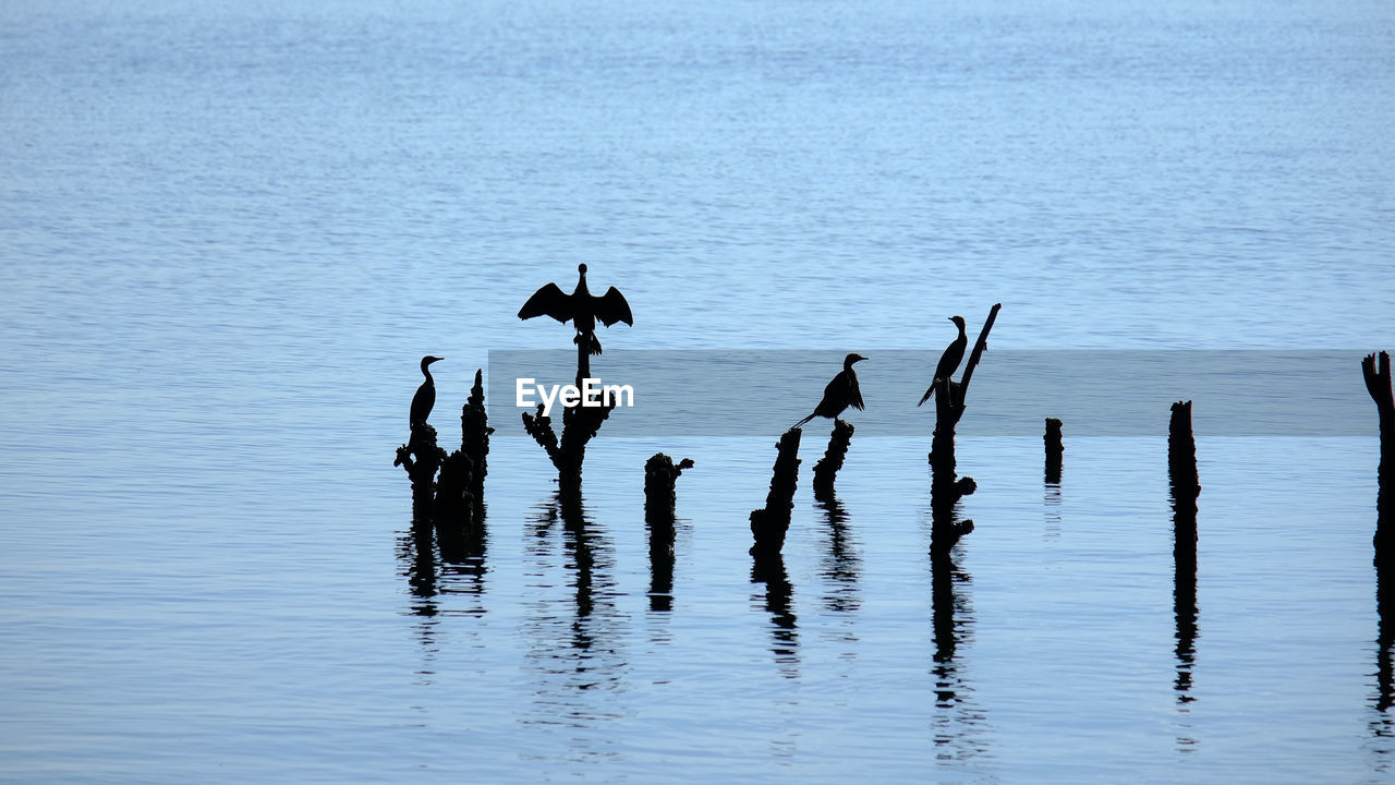Silhouette birds on wooden post in sea