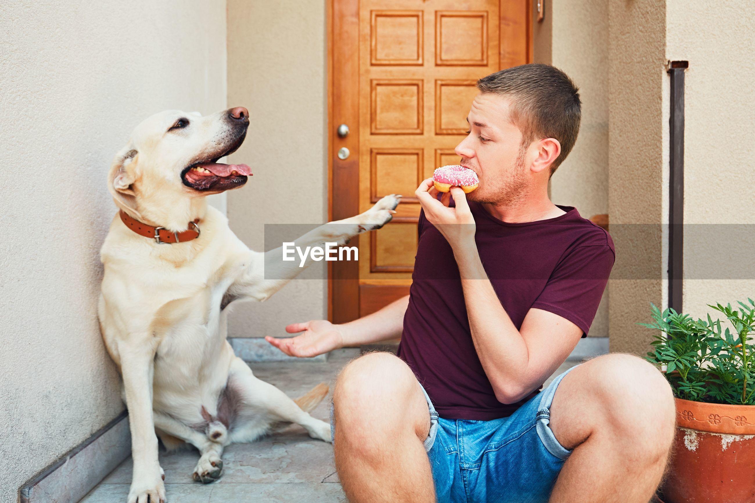 Labrador retriever reaching for man eating donut at entrance of house