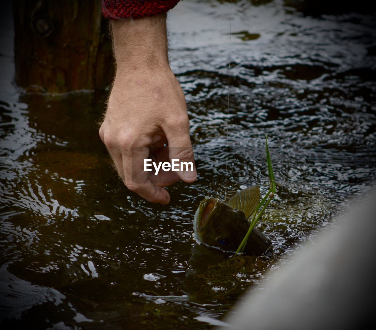 Cropped image of hand by fish in lake