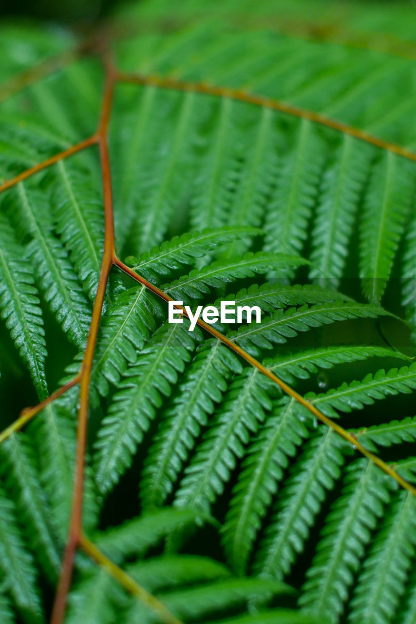 green color, leaf, growth, nature, close-up, plant, no people, day, beauty in nature, fern, outdoors, fragility, freshness