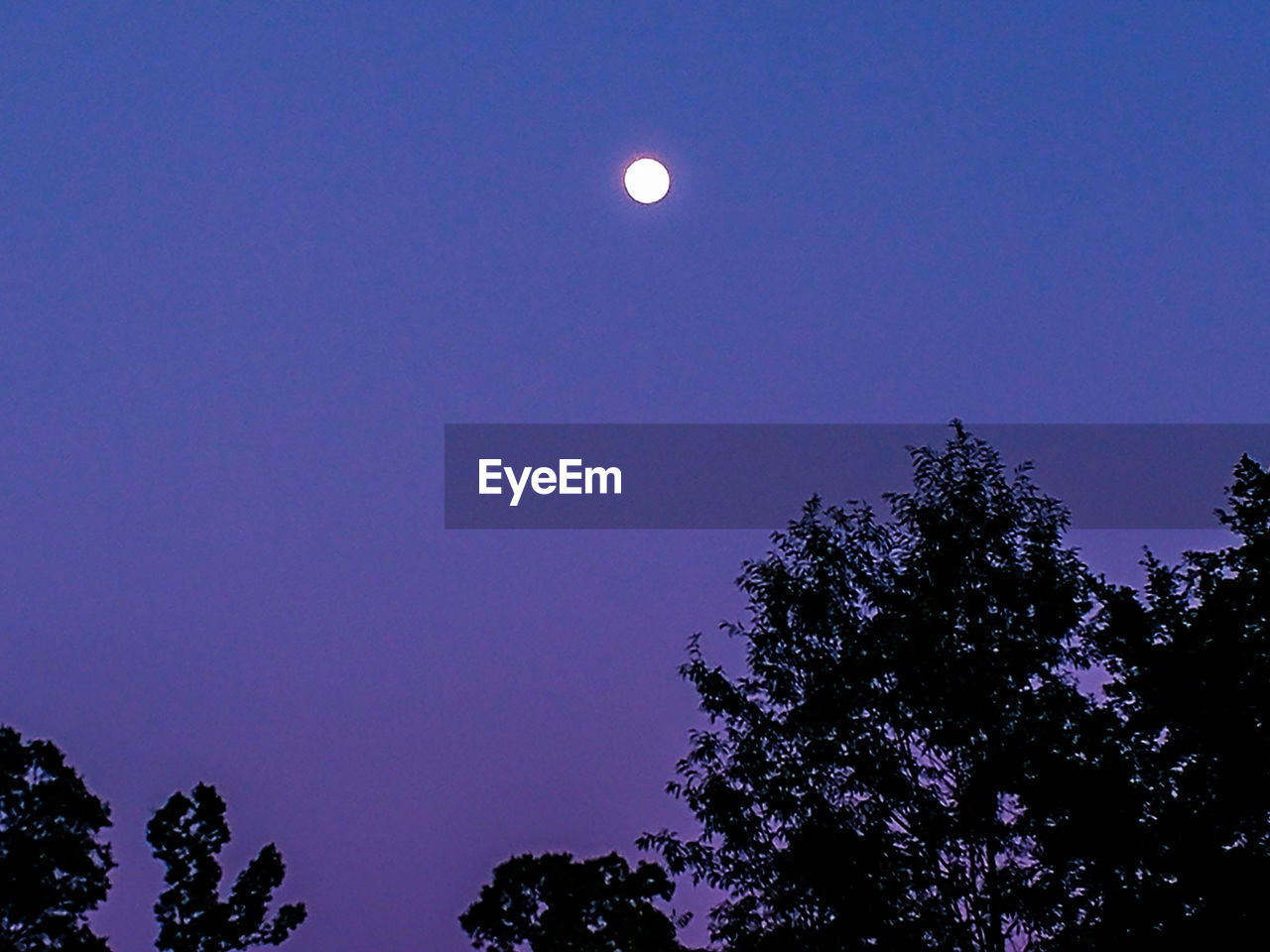 moon, tree, nature, low angle view, beauty in nature, clear sky, night, scenics, half moon, sky, tranquility, outdoors, no people, astronomy, growth, silhouette, blue, moonlight, crescent, space