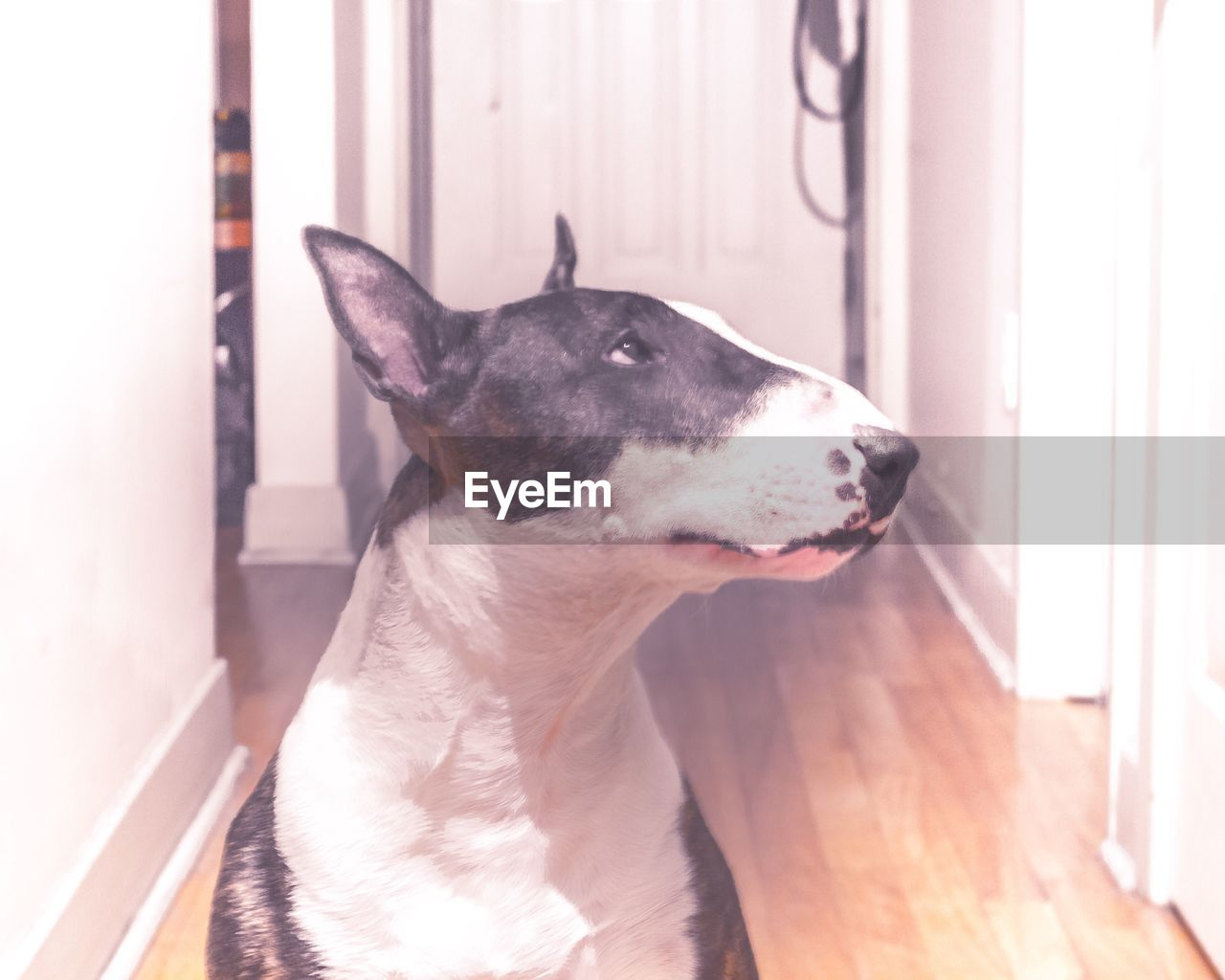 dog, pets, domestic animals, one animal, animal themes, mammal, indoors, home interior, sunlight, no people, day, close-up