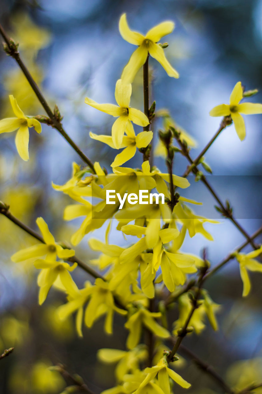 flower, flowering plant, plant, growth, beauty in nature, vulnerability, yellow, fragility, close-up, freshness, petal, nature, selective focus, inflorescence, no people, flower head, focus on foreground, day, blossom, springtime