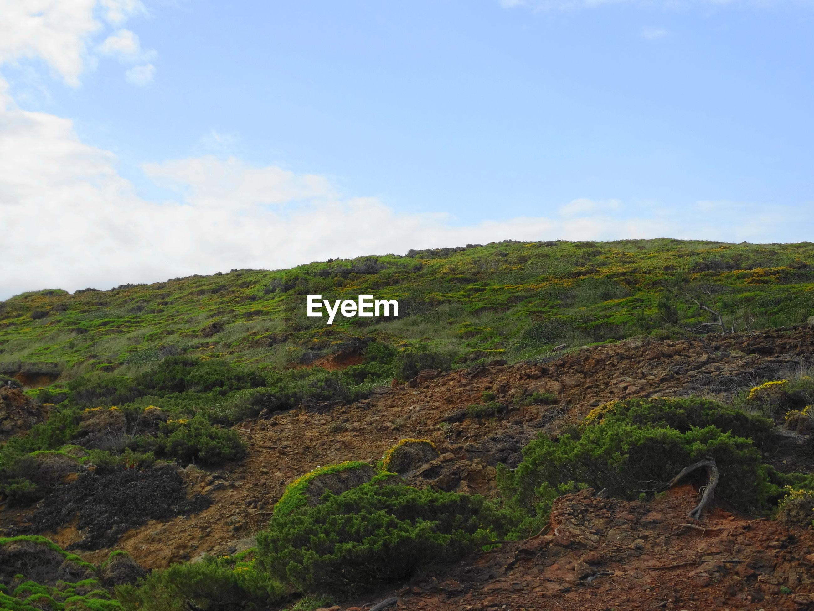 GREEN LANDSCAPE AGAINST SKY