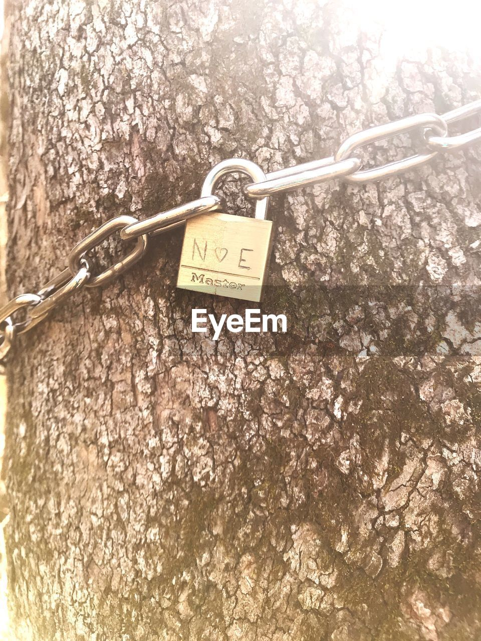 communication, text, no people, close-up, tree, love, protection, hanging, security, plant, padlock, day, lock, safety, metal, emotion, positive emotion, nature, outdoors, western script, message