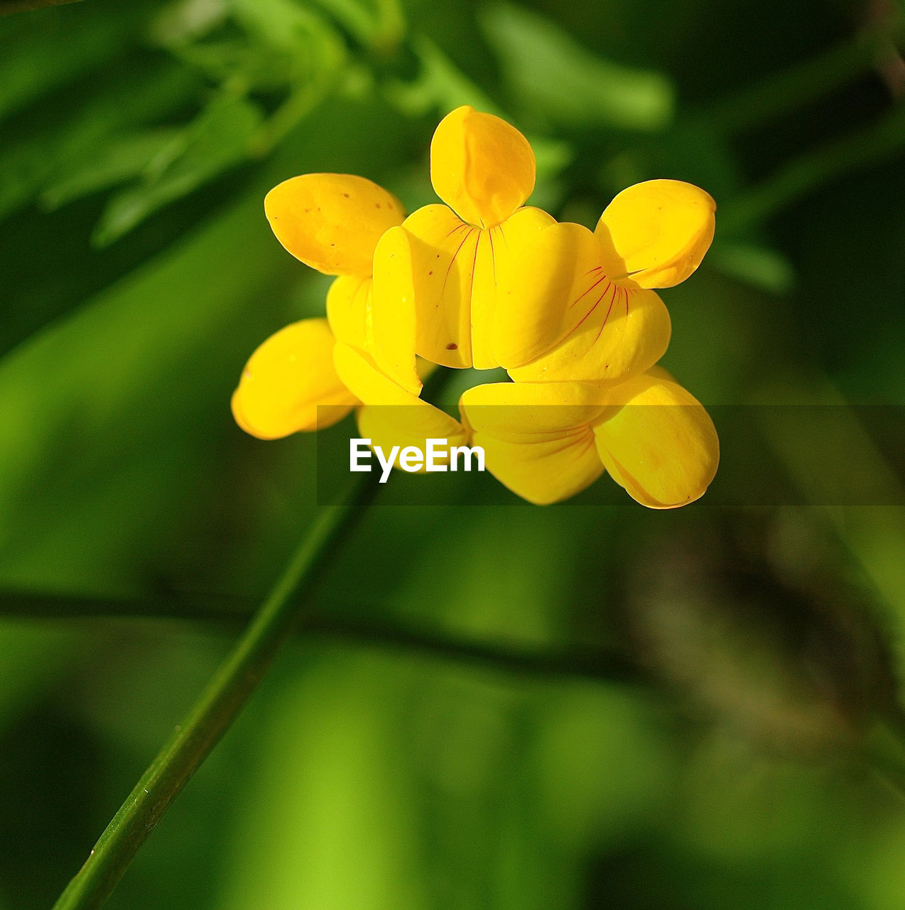 flower, flowering plant, plant, vulnerability, fragility, growth, freshness, petal, beauty in nature, yellow, close-up, inflorescence, flower head, focus on foreground, no people, day, nature, selective focus, outdoors, plant stem, pollen