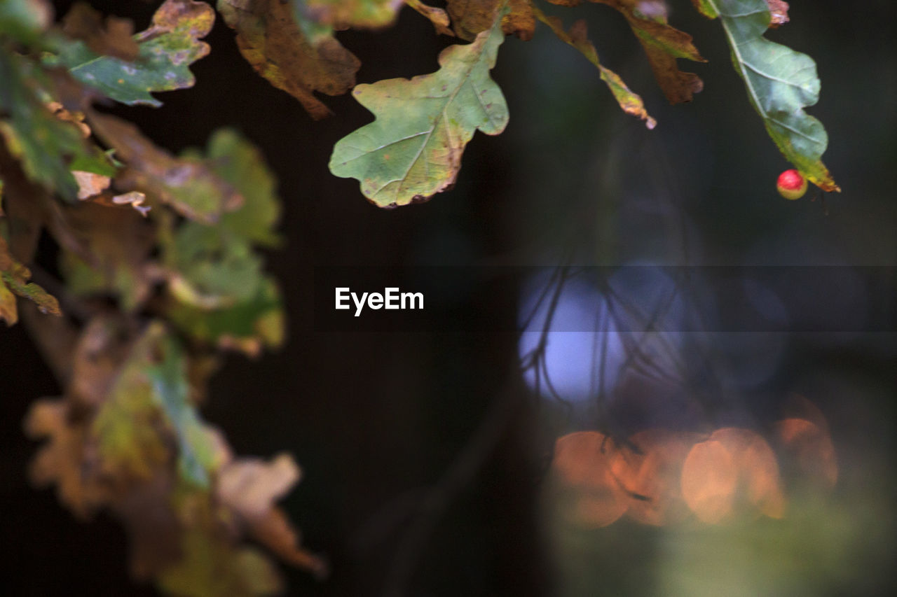 growth, plant, nature, leaf, focus on foreground, outdoors, no people, day, close-up, fragility, beauty in nature, freshness