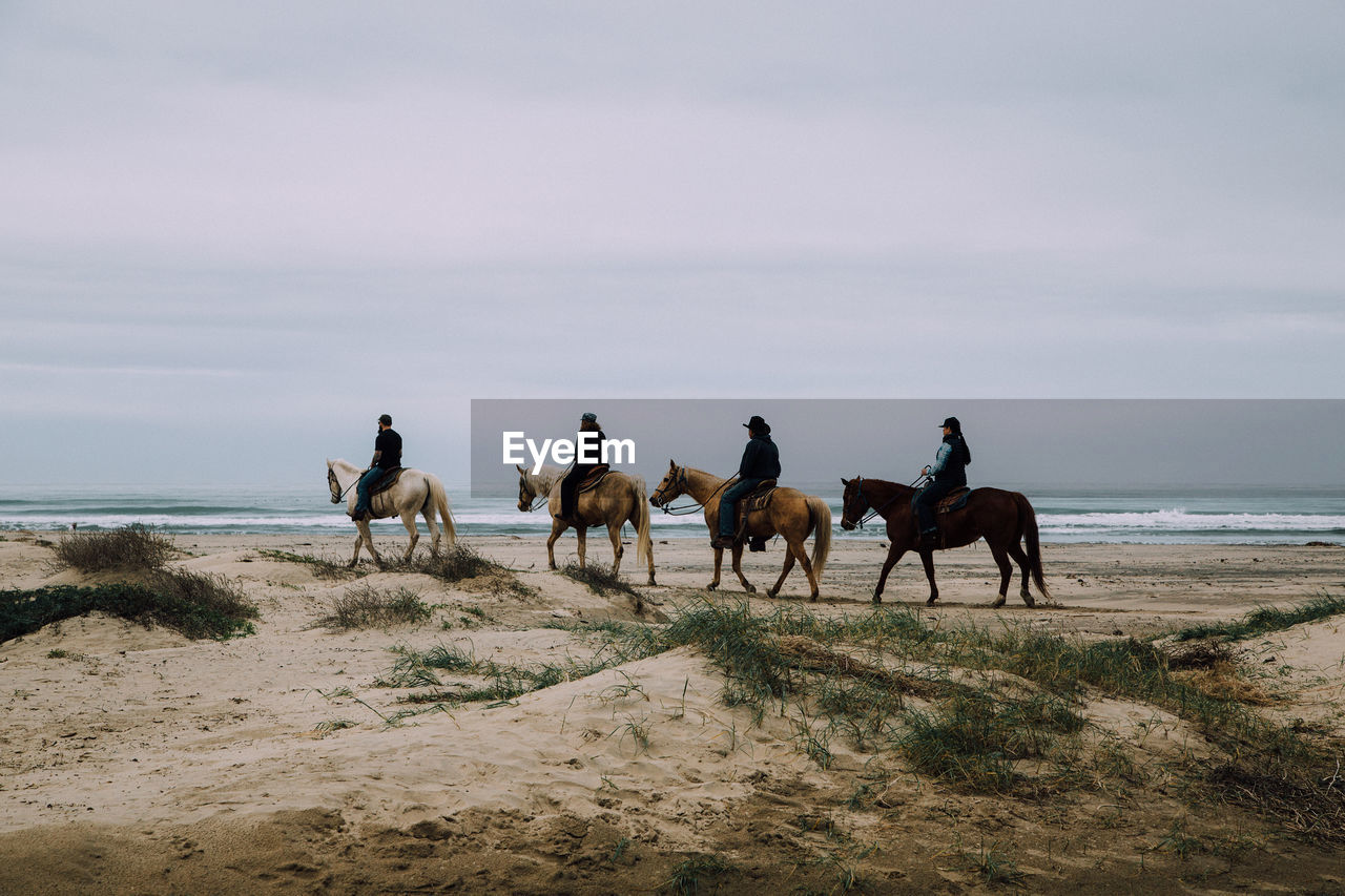 Side view of horse ride on beach