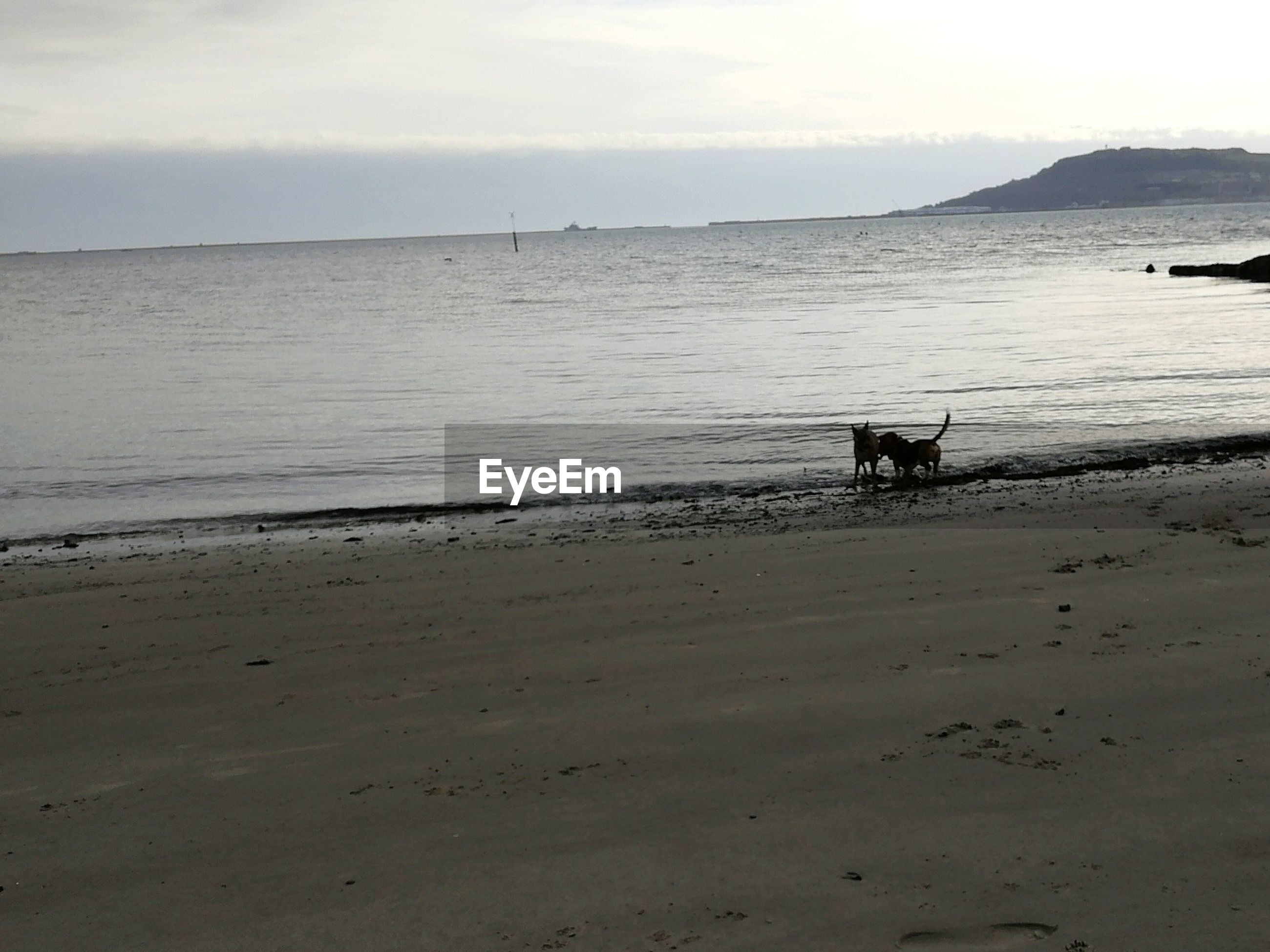 sea, water, beach, shore, nature, sand, sky, domestic animals, dog, scenics, animal themes, beauty in nature, horizon over water, pets, outdoors, mammal, one animal, no people, day