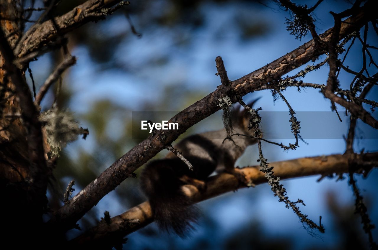 branch, tree, low angle view, nature, no people, day, outdoors, growth, beauty in nature, close-up, sky, animal themes