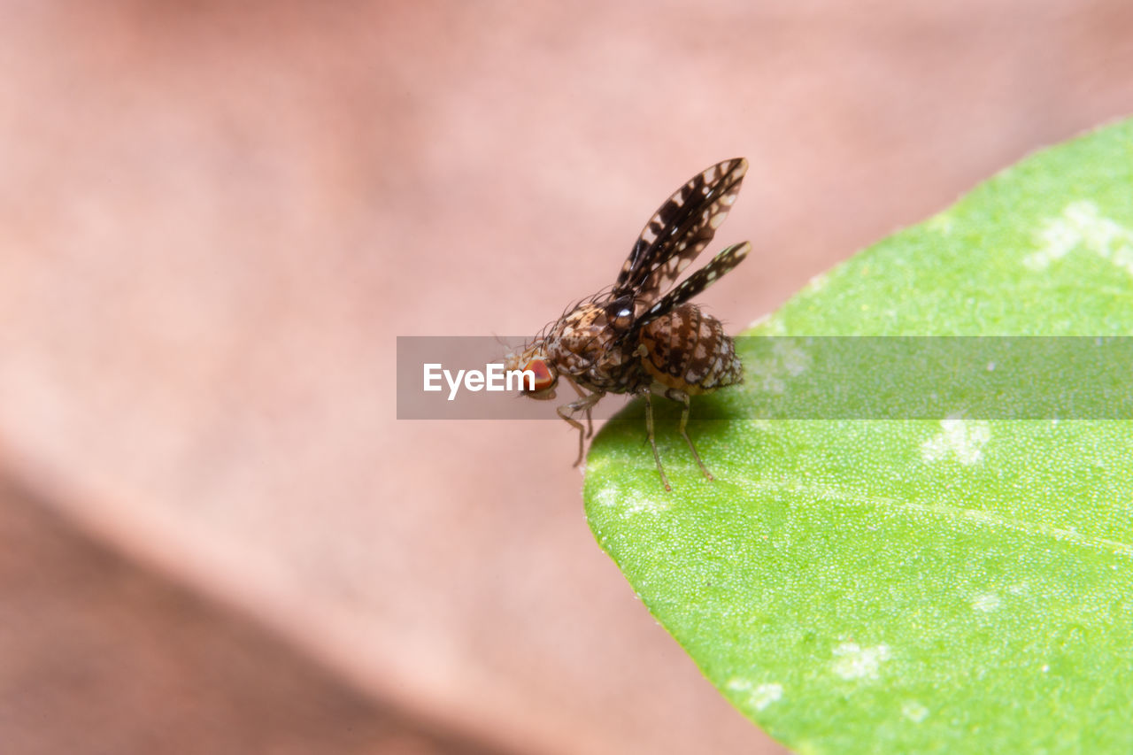 animal wildlife, invertebrate, animal themes, animals in the wild, insect, animal, one animal, close-up, plant part, selective focus, leaf, green color, no people, day, nature, zoology, animal wing, plant, arthropod, outdoors