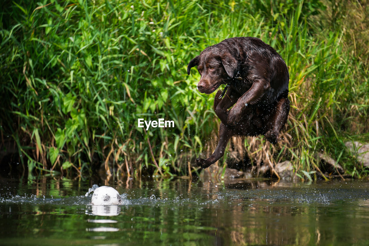 animal themes, animal, animal wildlife, one animal, water, animals in the wild, mammal, nature, no people, vertebrate, day, animals hunting, survival, outdoors, plant, reflection, underwater, river, wetland