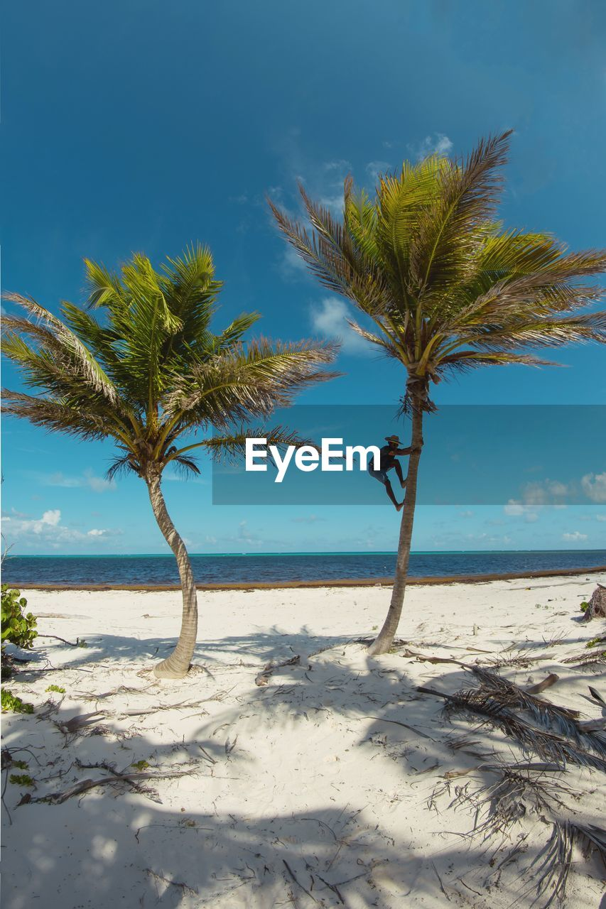 beach, land, sea, water, sky, palm tree, tropical climate, tree, beauty in nature, sand, plant, scenics - nature, tranquility, tranquil scene, nature, horizon, horizon over water, day, growth, no people, outdoors, coconut palm tree