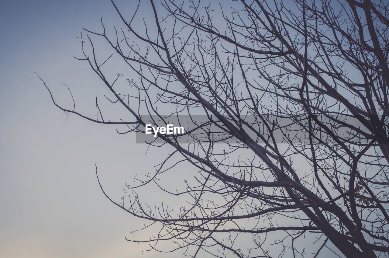 bare tree, branch, tree, nature, no people, outdoors, tranquility, beauty in nature, low angle view, silhouette, sky, day
