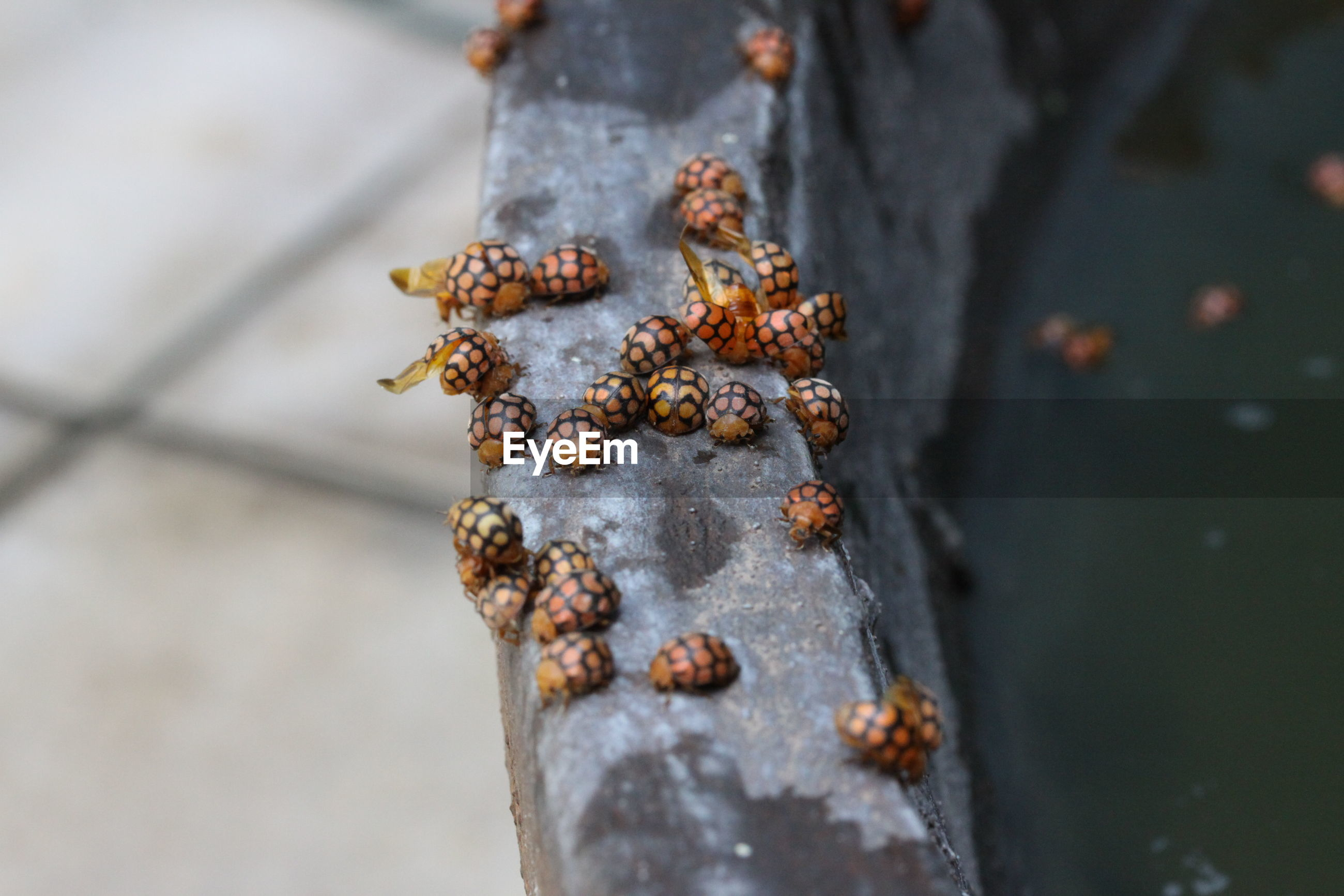 High angle view of insects on land