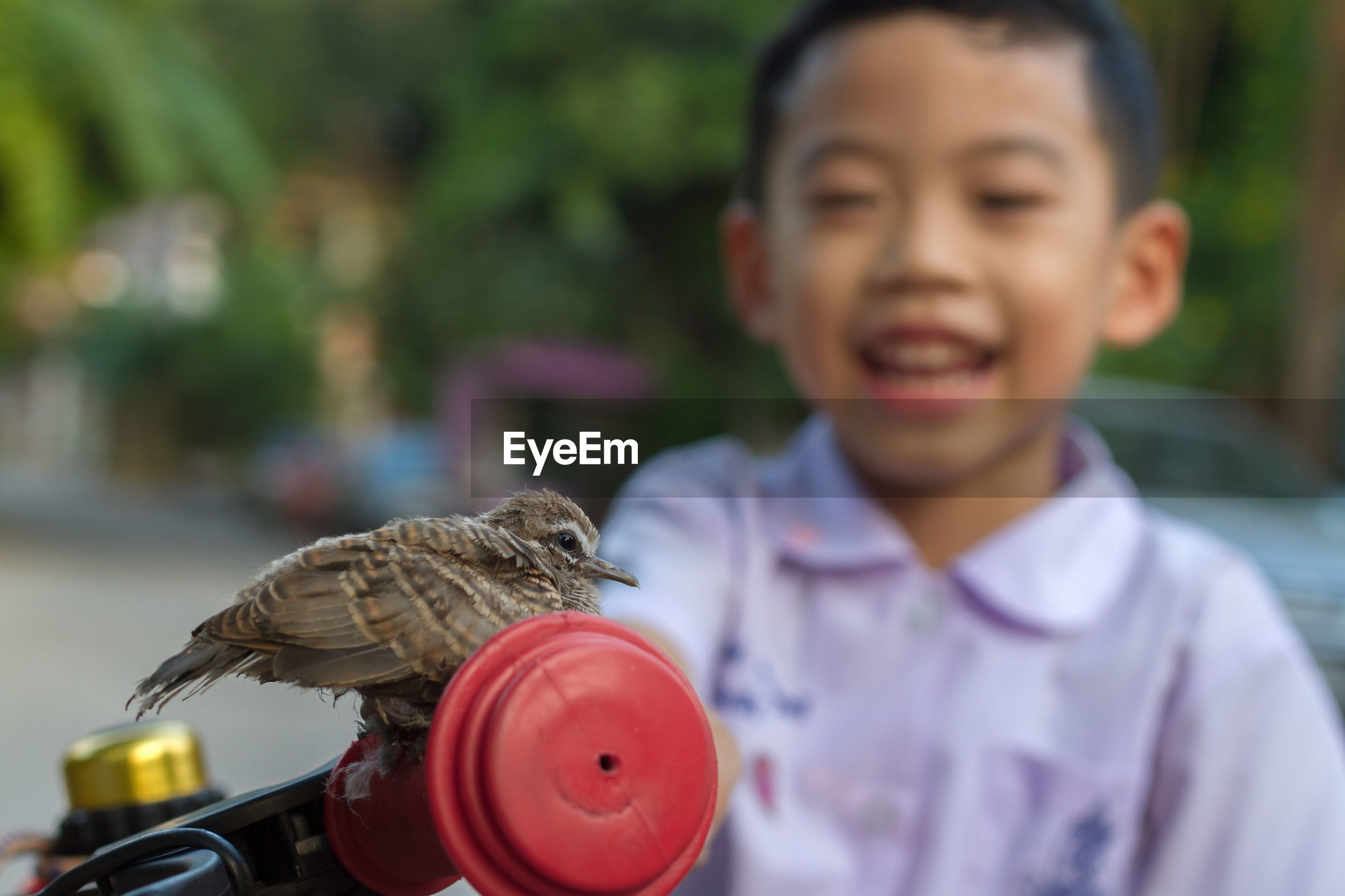 Close-up of bird on bicycle handlebar against boy