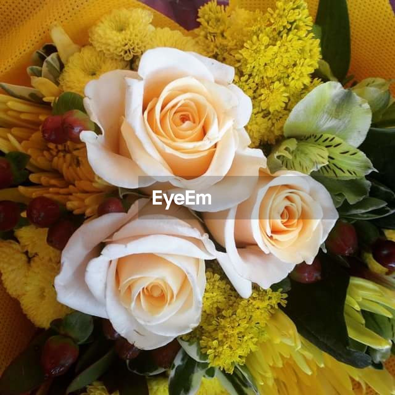 flower, rose - flower, petal, fragility, beauty in nature, flower head, freshness, no people, nature, high angle view, bouquet, close-up, indoors, yellow, growth, plant, day